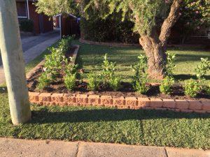 Garden care service